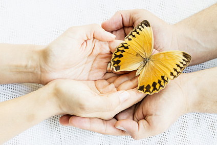 A butterfly in two pairs of hands
